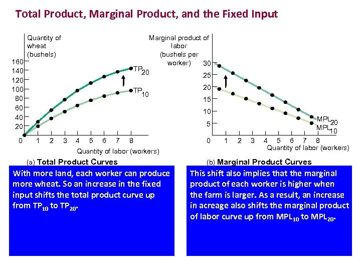 Total Product, Marginal Product, and the Fixed Input 160 140 120 100 80 60