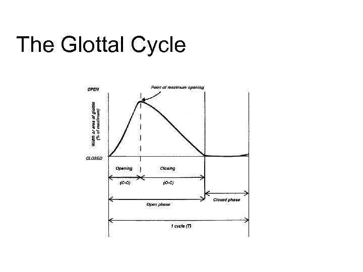 The Glottal Cycle