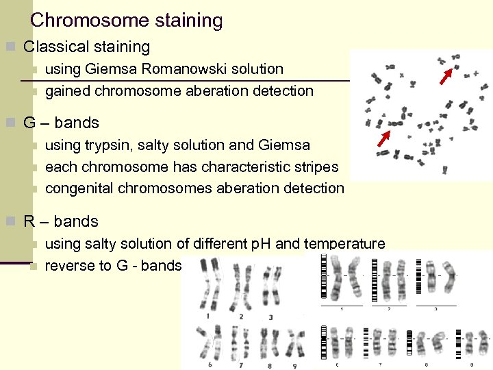 Chromosome staining n Classical staining n using Giemsa Romanowski solution n gained chromosome aberation