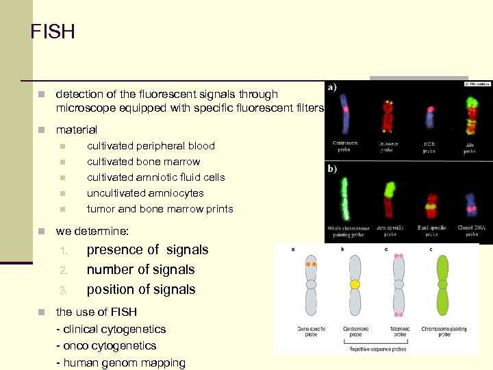 FISH n detection of the fluorescent signals through microscope equipped with specific fluorescent filters