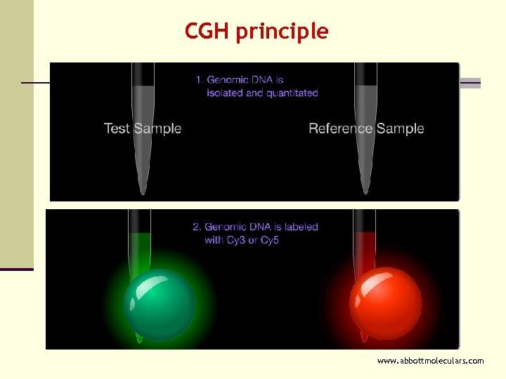 CGH principle www. abbottmoleculars. com