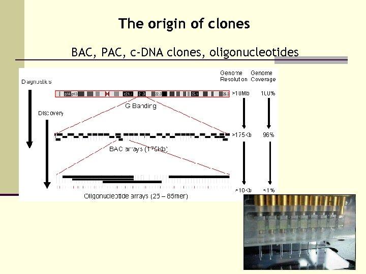 The origin of clones BAC, PAC, c-DNA clones, oligonucleotides