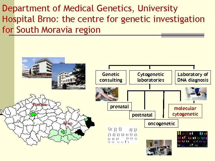 Department of Medical Genetics, University Hospital Brno: the centre for genetic investigation for South