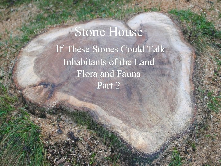Stone House If These Stones Could Talk Inhabitants of the Land Flora and Fauna