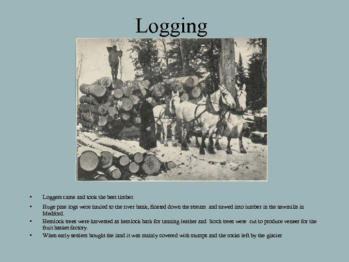 Logging • Loggers came and took the best timber. • Huge pine logs were