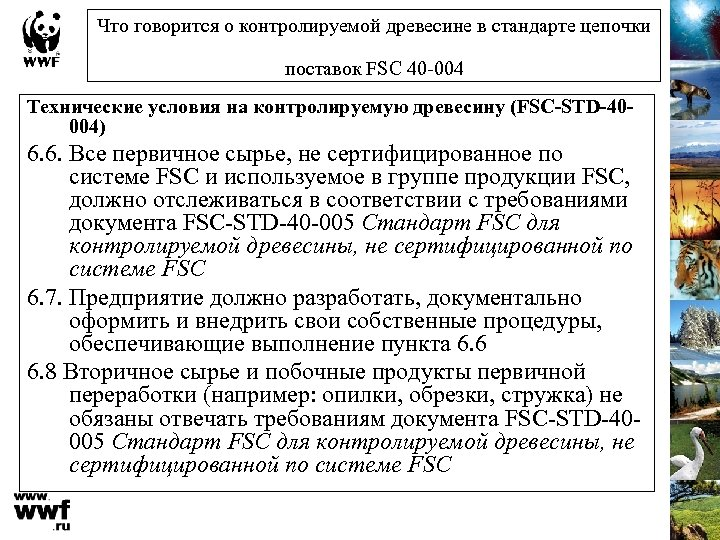 Что говорится о контролируемой древесине в стандарте цепочки поставок FSC 40 -004 Технические условия