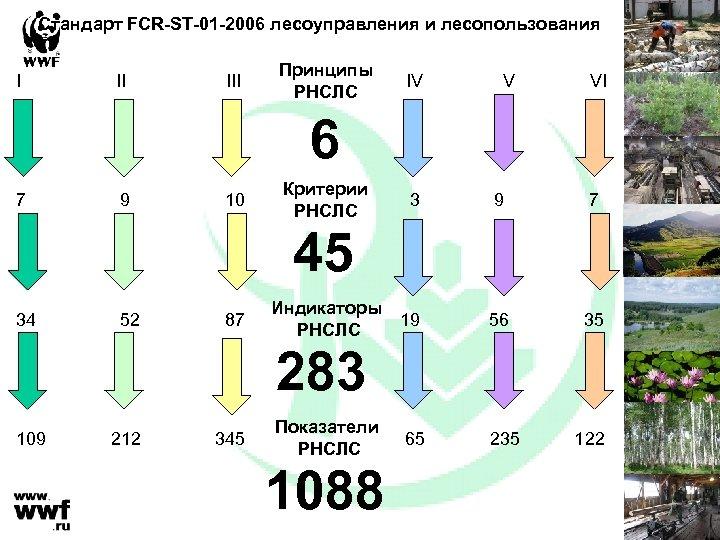 Стандарт FCR-ST-01 -2006 лесоуправления и лесопользования I II III Принципы РНСЛС IV V VI