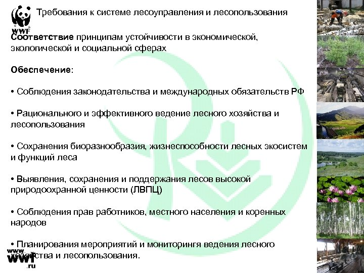 Требования к системе лесоуправления и лесопользования Соответствие принципам устойчивости в экономической, экологической и социальной