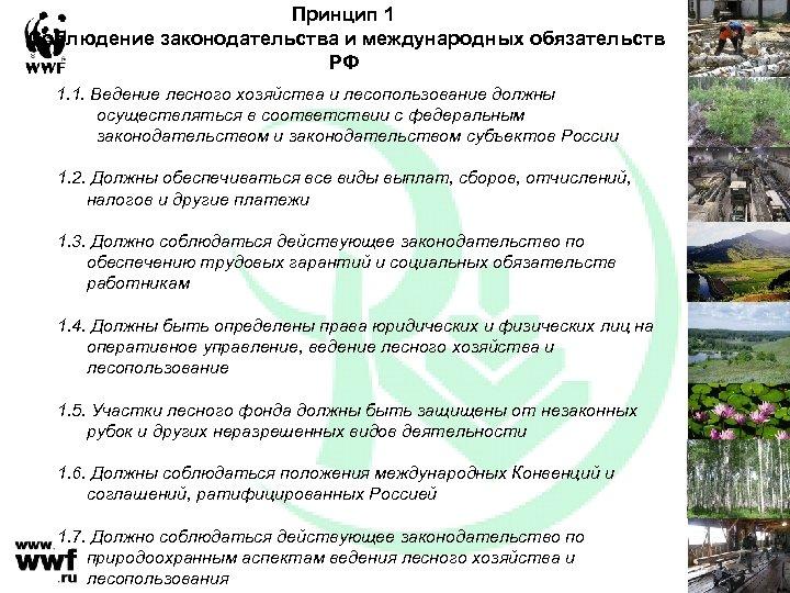 Принцип 1 Соблюдение законодательства и международных обязательств РФ 1. 1. Ведение лесного хозяйства и