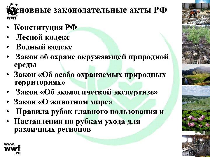 Основные законодательные акты РФ • • • Конституция РФ Лесной кодекс Водный кодекс Закон