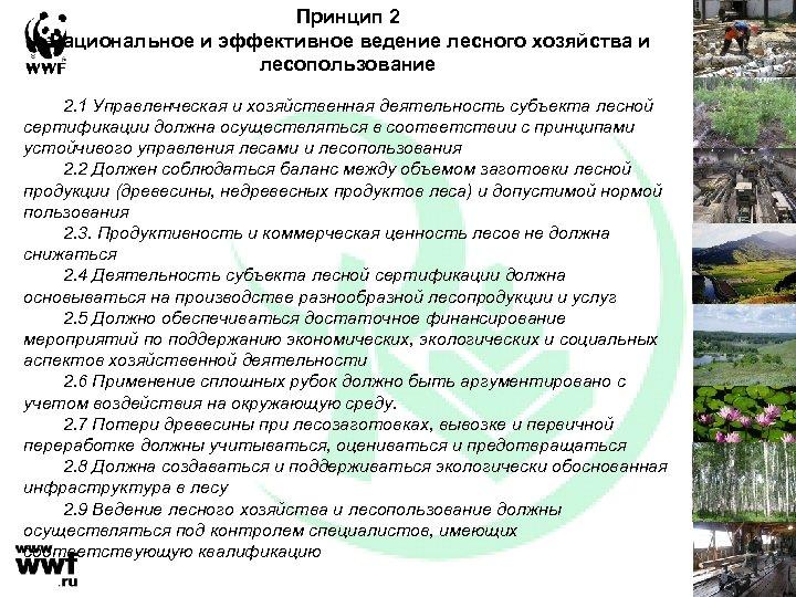 Принцип 2 Рациональное и эффективное ведение лесного хозяйства и лесопользование 2. 1 Управленческая и