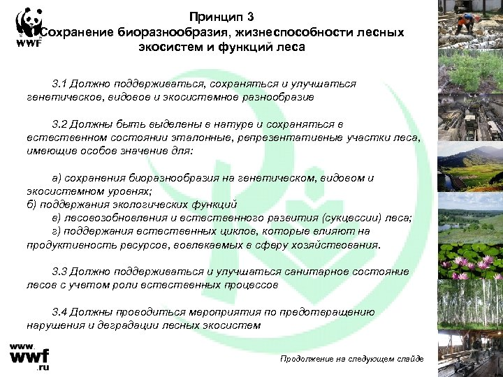 Принцип 3 Сохранение биоразнообразия, жизнеспособности лесных экосистем и функций леса 3. 1 Должно поддерживаться,