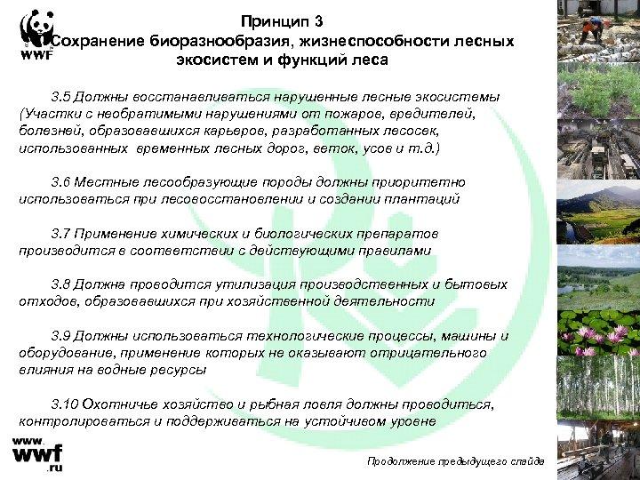 Принцип 3 Сохранение биоразнообразия, жизнеспособности лесных экосистем и функций леса 3. 5 Должны восстанавливаться