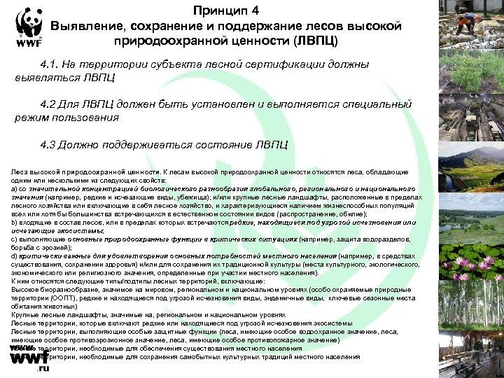 Принцип 4 Выявление, сохранение и поддержание лесов высокой природоохранной ценности (ЛВПЦ) 4. 1. На