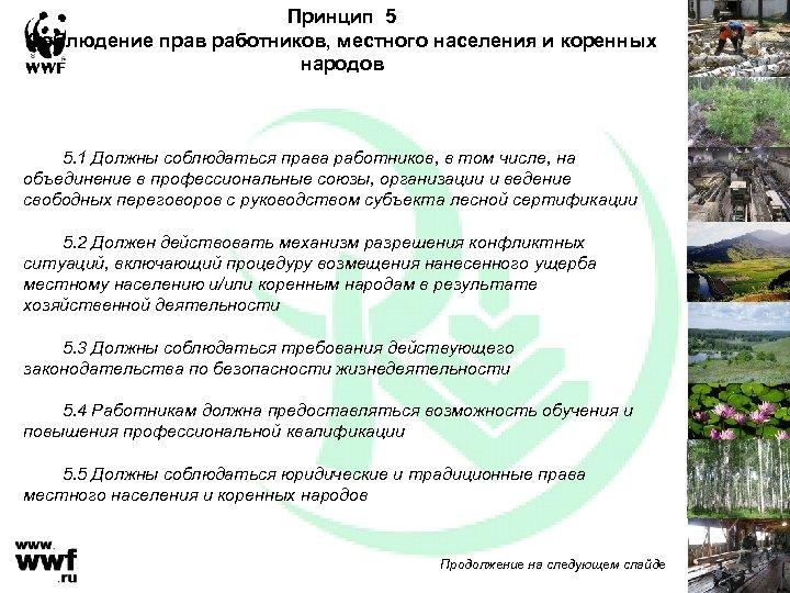 Принцип 5 Соблюдение прав работников, местного населения и коренных народов 5. 1 Должны соблюдаться