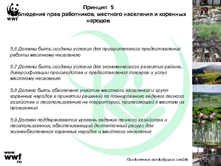 Принцип 5 Соблюдение прав работников, местного населения и коренных народов 5. 6 Должны быть