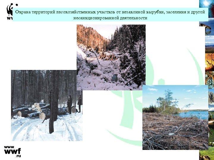 Охрана территорий лесохозяйственных участков от незаконной вырубки, заселения и другой несанкционированной деятельности