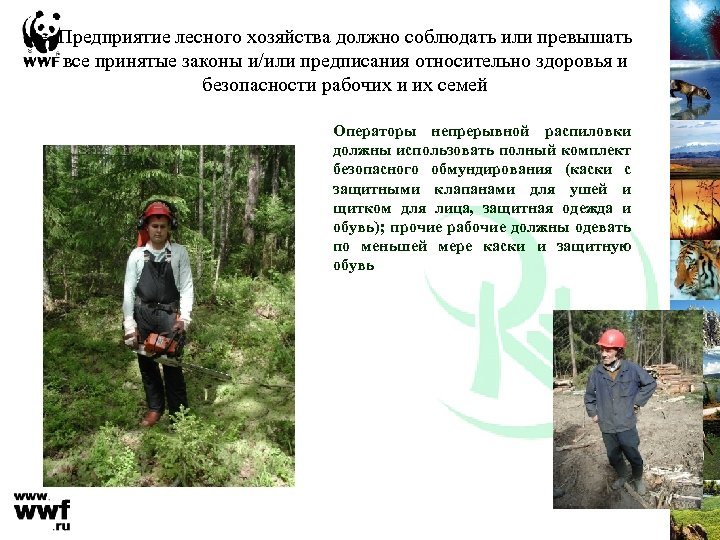 Предприятие лесного хозяйства должно соблюдать или превышать все принятые законы и/или предписания относительно здоровья