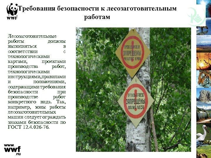 Требования безопасности к лесозаготовительным работам Лесозаготовительные работы должны выполняться в соответствии с технологическими картами,