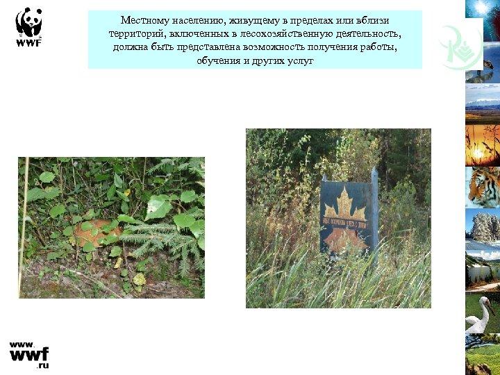 Местному населению, живущему в пределах или вблизи территорий, включенных в лесохозяйственную деятельность, должна быть