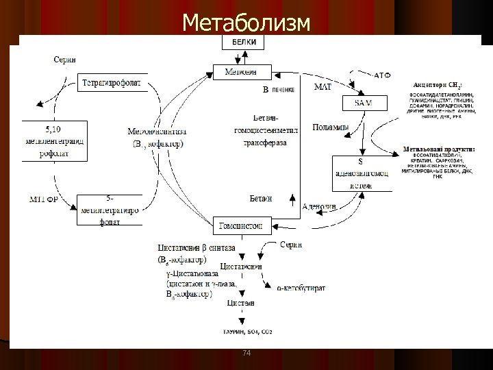 Метаболизм 74 74