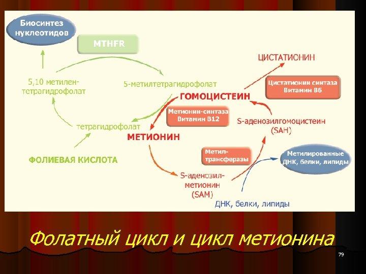Фолатный цикл и цикл метионина 79
