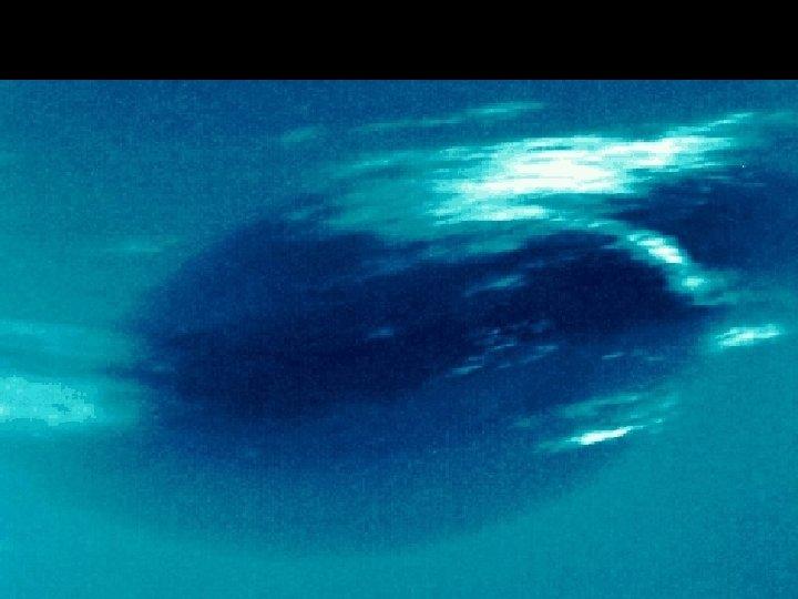 Neptune great dark spot