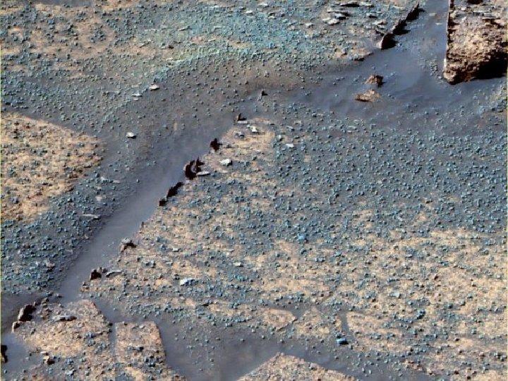 Martian rock; blueberries, razorback