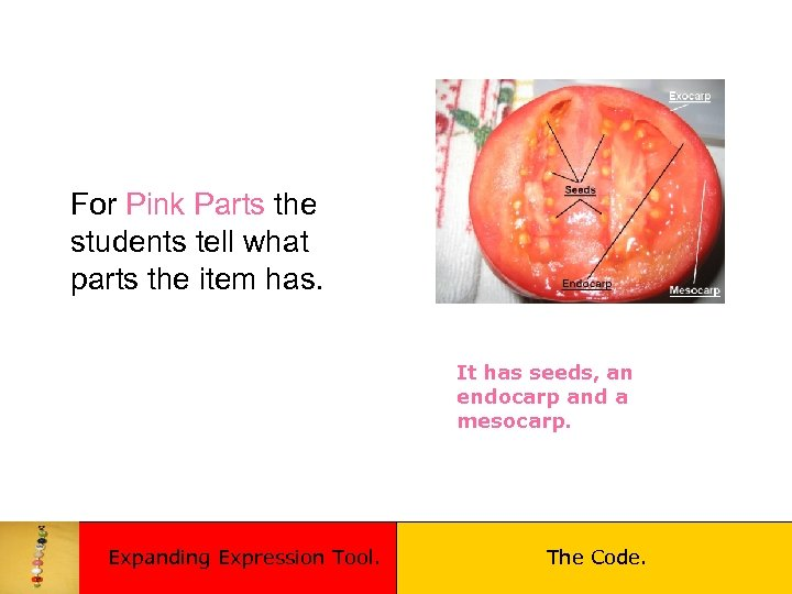 For Pink Parts the students tell what parts the item has. It has seeds,