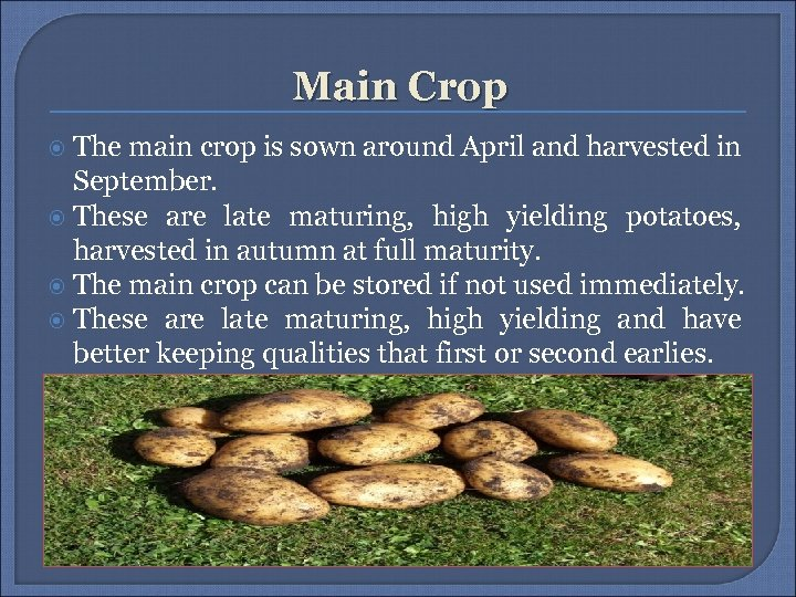 Main Crop The main crop is sown around April and harvested in September. These