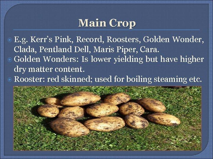 Main Crop E. g. Kerr's Pink, Record, Roosters, Golden Wonder, Clada, Pentland Dell, Maris