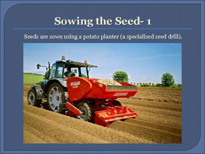 Sowing the Seed- 1 Seeds are sown using a potato planter (a specialised seed
