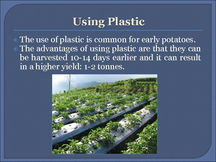 Using Plastic The use of plastic is common for early potatoes. The advantages of