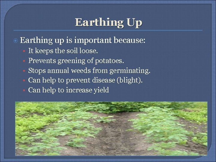 Earthing Up Earthing up is important because: • • • It keeps the soil