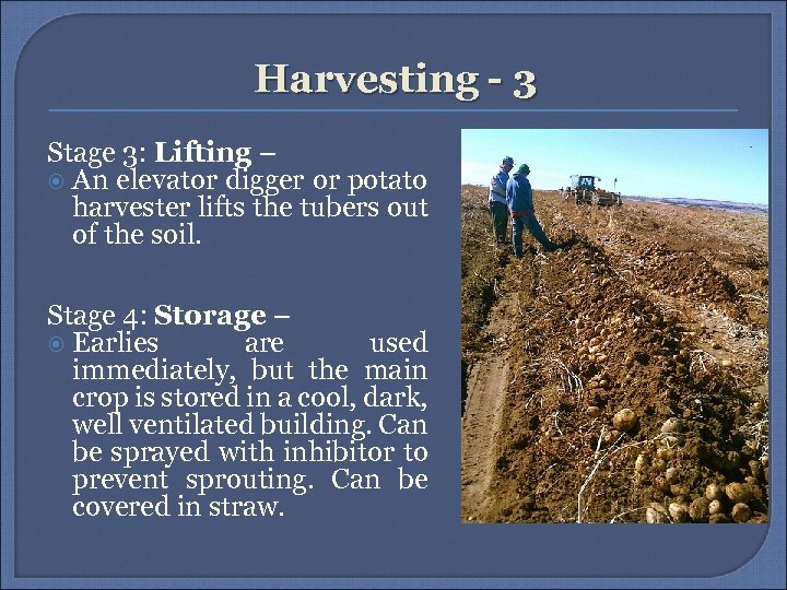 Harvesting - 3 Stage 3: Lifting – An elevator digger or potato harvester lifts