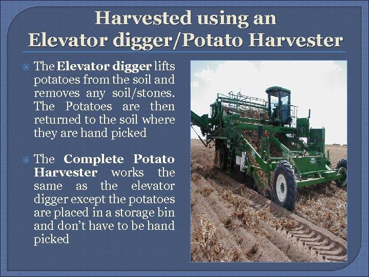 Harvested using an Elevator digger/Potato Harvester The Elevator digger lifts potatoes from the soil