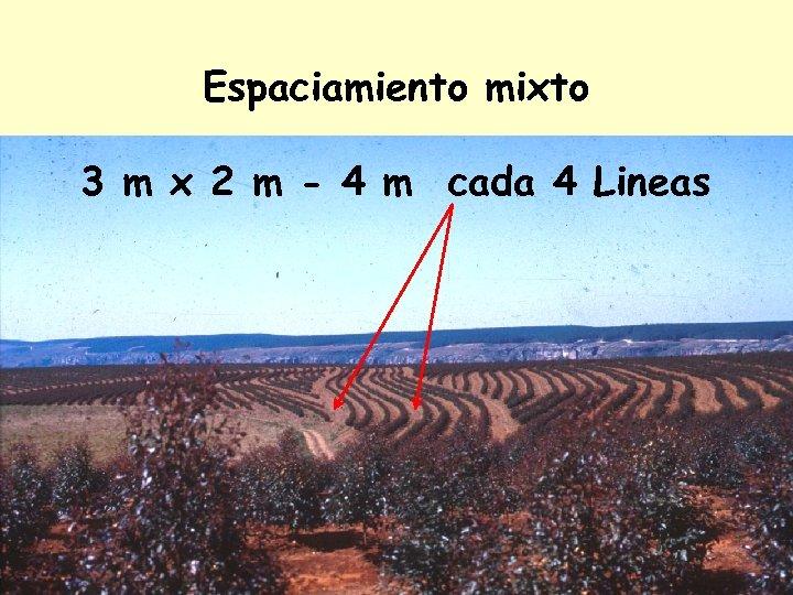 Espaciamiento mixto 3 m x 2 m - 4 m cada 4 Lineas