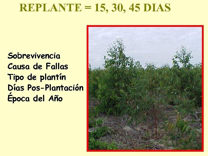 REPLANTE = 15, 30, 45 DIAS Sobrevivencia Causa de Fallas Tipo de plantín Días