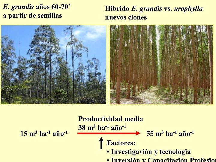 E. grandis años 60 -70' a partir de semillas 15 m 3 ha-1 año-1
