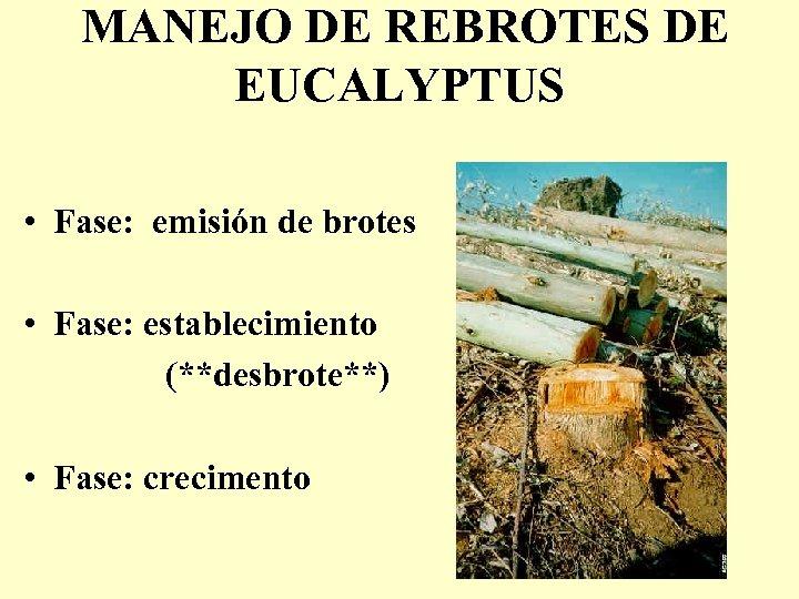 MANEJO DE REBROTES DE EUCALYPTUS • Fase: emisión de brotes • Fase: establecimiento (**desbrote**)
