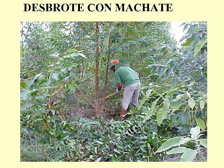 DESBROTE CON MACHATE