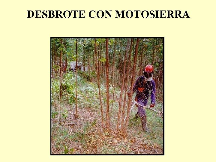 DESBROTE CON MOTOSIERRA
