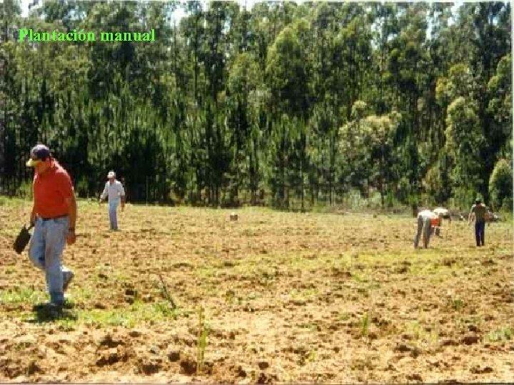 Plantación manual