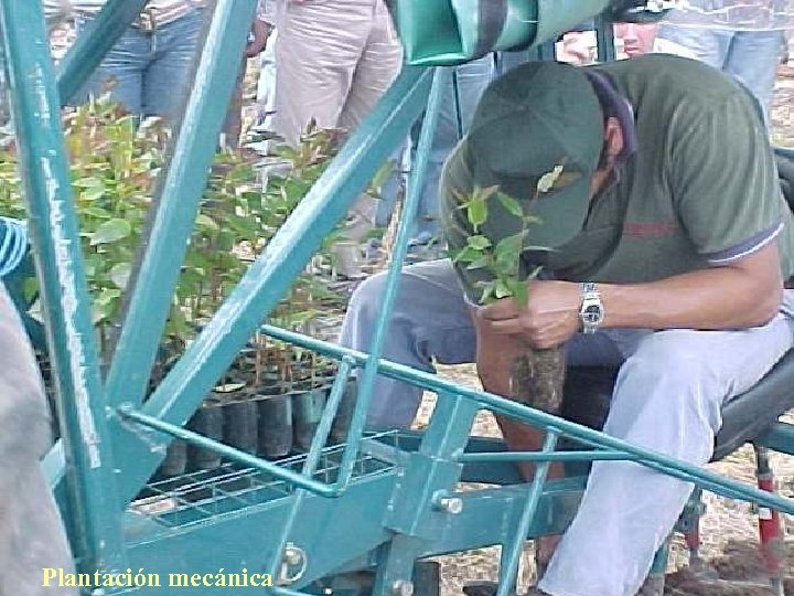 Plantación mecánica