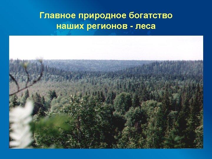 Главное природное богатство наших регионов - леса