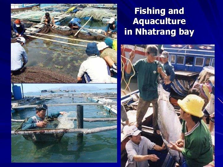 Fishing and Aquaculture in Nhatrang bay