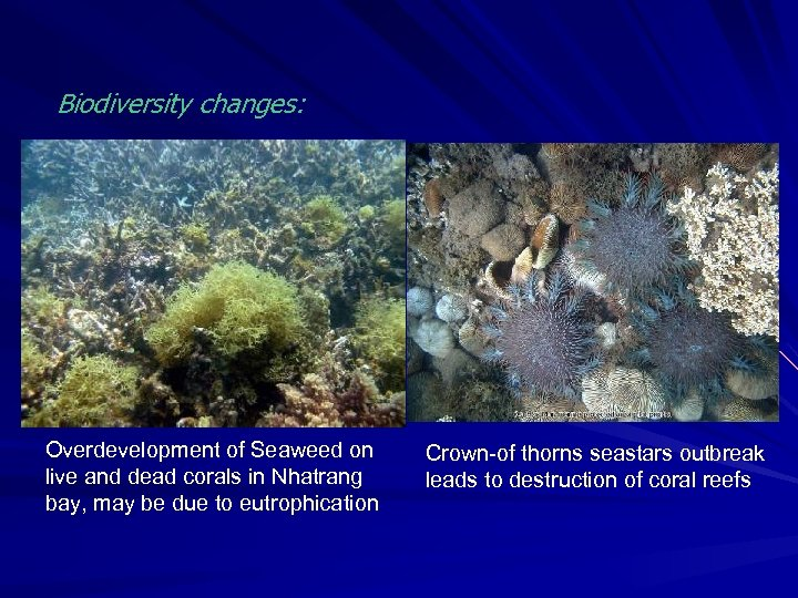 Biodiversity changes: Overdevelopment of Seaweed on live and dead corals in Nhatrang bay, may