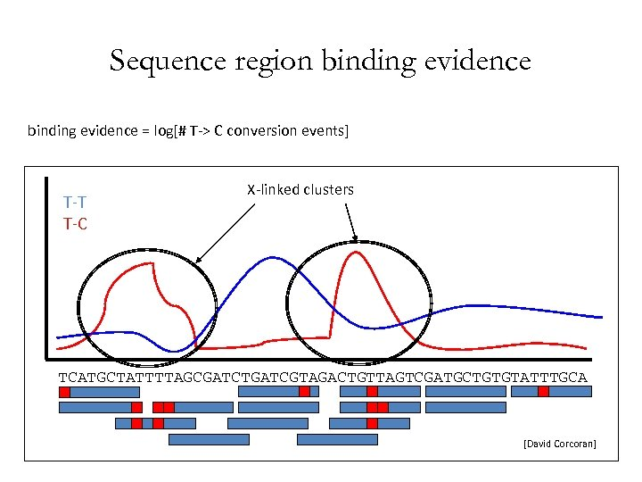 Sequence region binding evidence = log[# T-> C conversion events] T-T T-C X-linked clusters