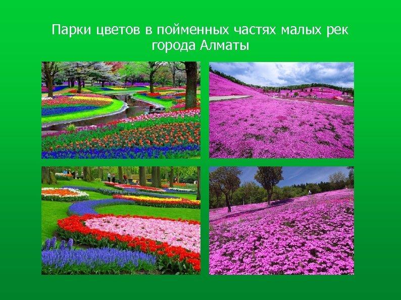 Парки цветов в пойменных частях малых рек города Алматы