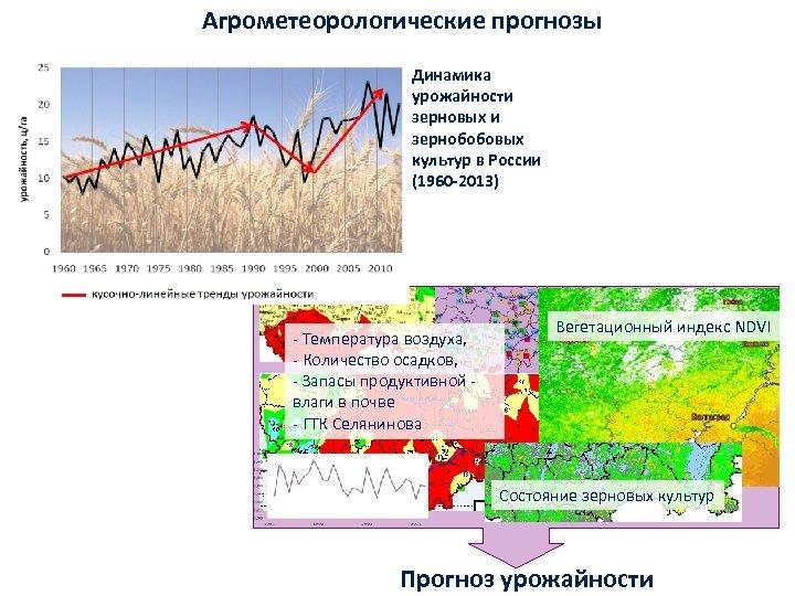 Агрометеорологические прогнозы Динамика урожайности зерновых и зернобобовых культур в России (1960 -2013) ‐ Температура